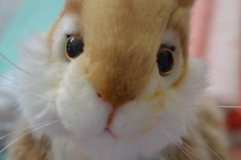 Stuffed Bunny closeup 2