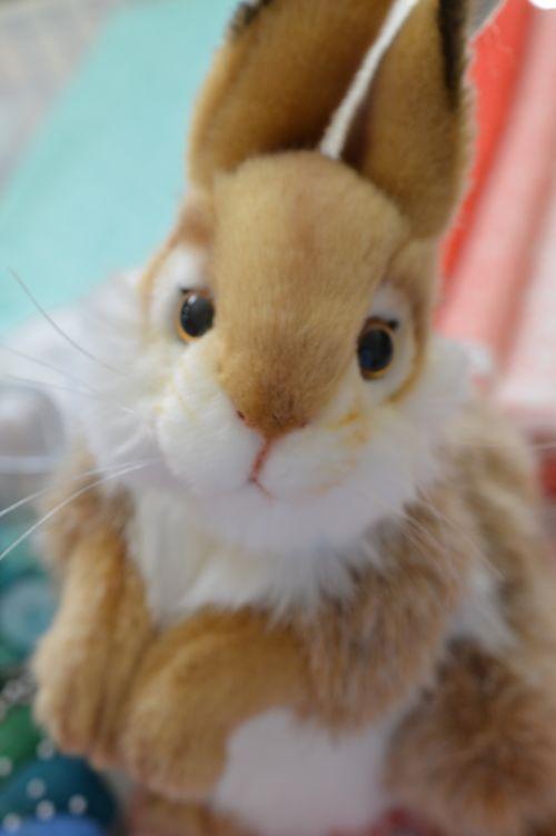 Stuffed Bunny closeup 1